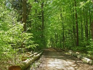 Entspannung finden bei einem Waldspaziergang