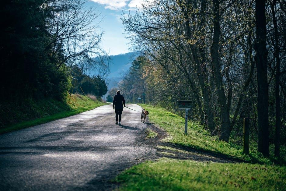 Ein Hund hilft bei mehr Bewegung im Alltag